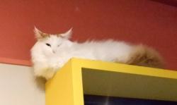 ねこぶくろの猫ちゃん