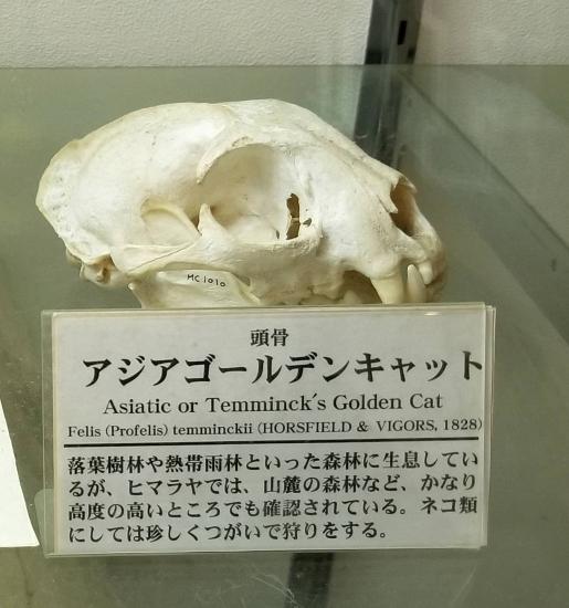 可愛い子猫ちゃん(中身)