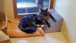 寝猫(ねねこ)