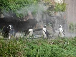 penguin_20190825194159ea8.jpg
