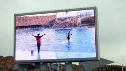 名古屋港水族館。イルカのファインプレーはリプレイされる