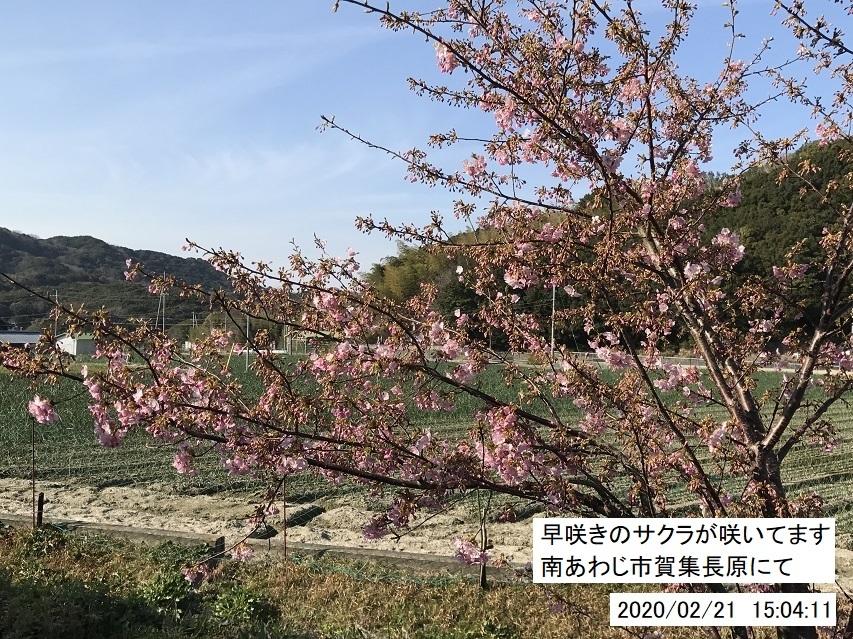 暖冬で野も山も花いっぱい