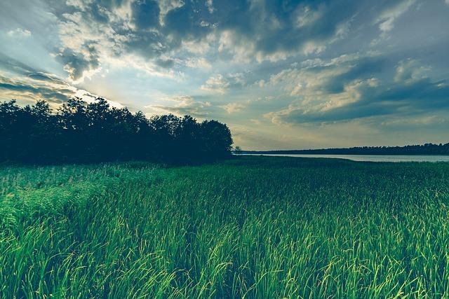 フリー画像・空と麦畑