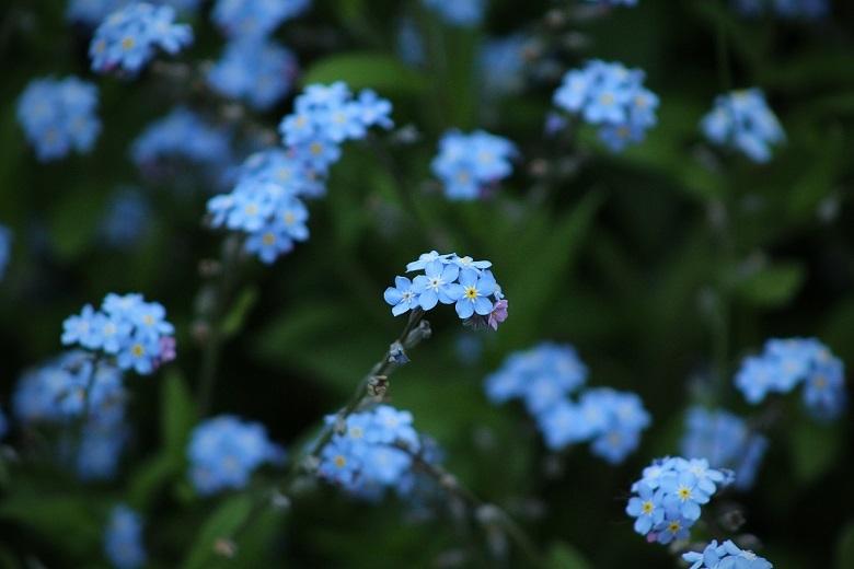 blue flower3