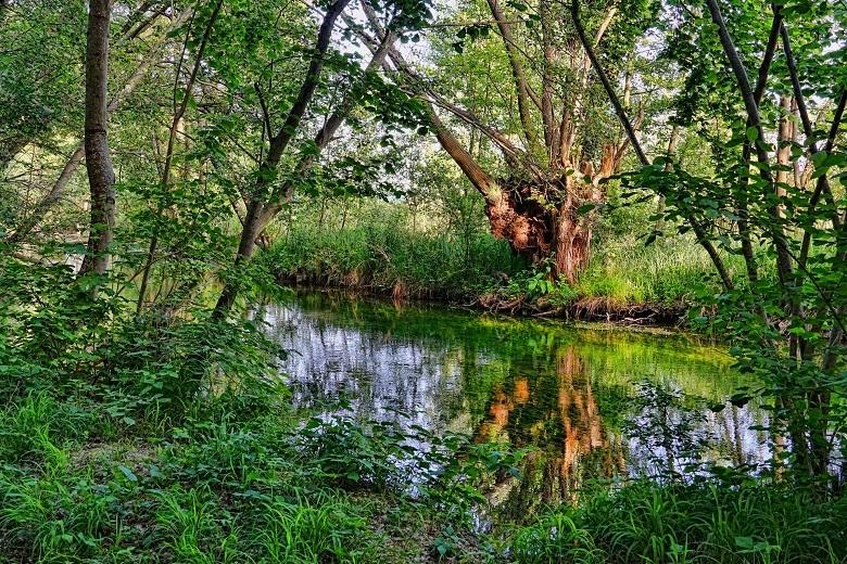 spring water-780