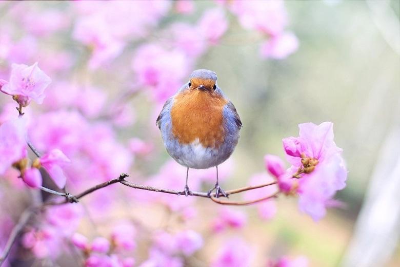 bird-spring2-780.jpg