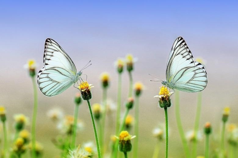 butterfly-780.jpg