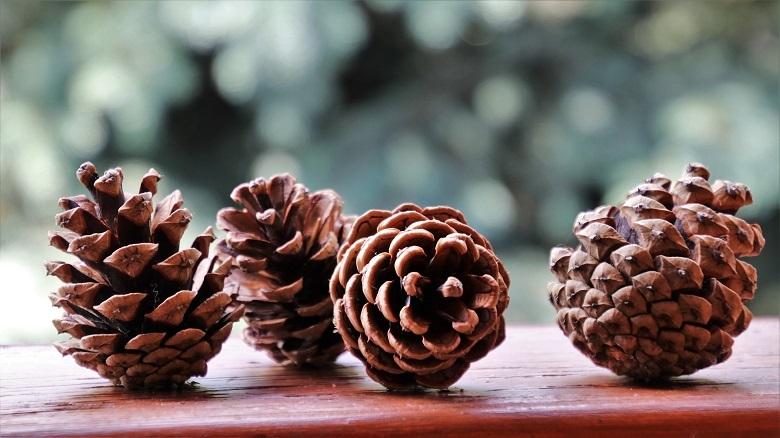 cones01-780.jpg