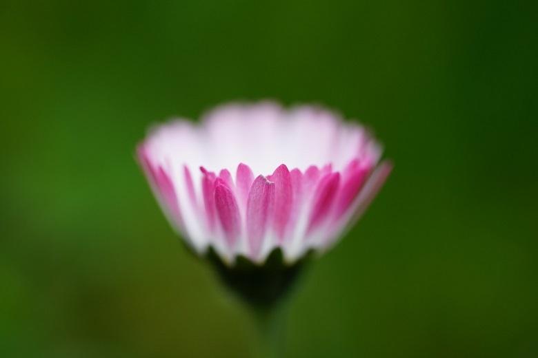 daisy02-780.jpg