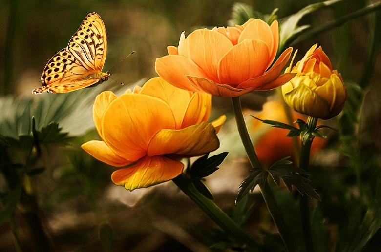 flowers-780.jpg