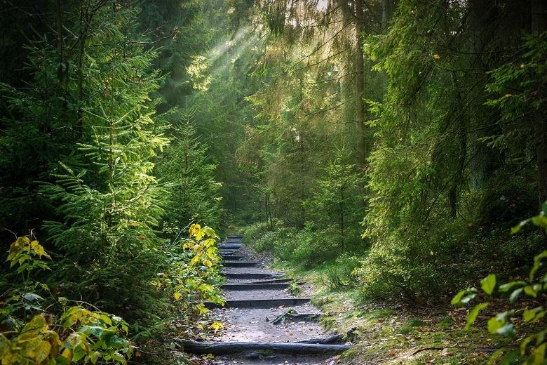forest-01-780.jpg
