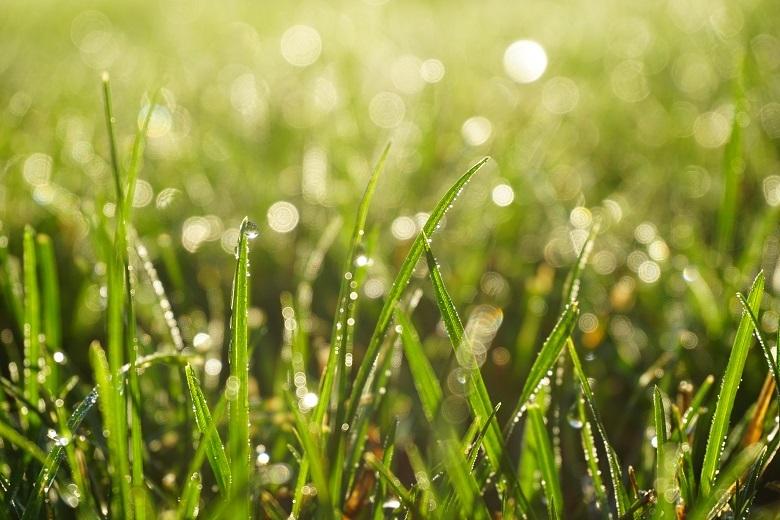 grass-drops-780.jpg