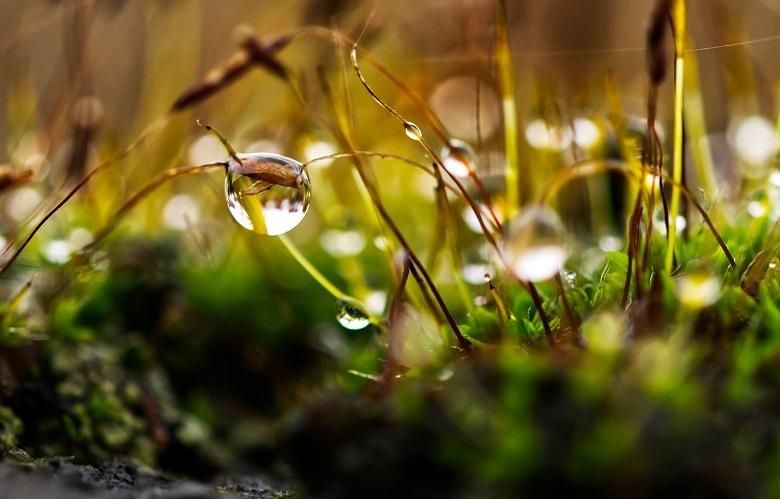 green-dew-780.jpg