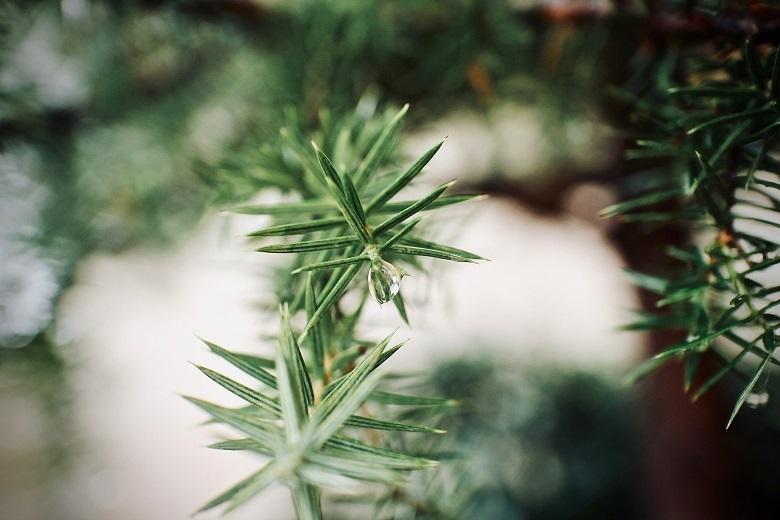 green-leaves01-780.jpg