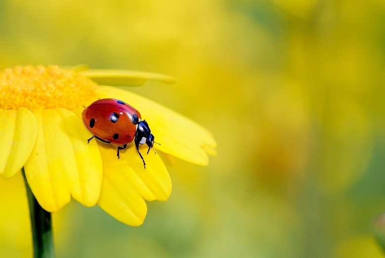 insects-780.jpg
