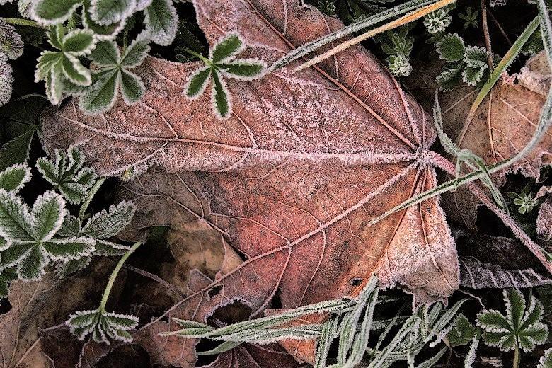 leaves-winter02-780.jpg