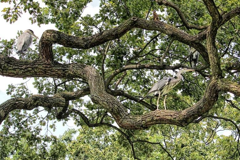 oak-birds-780.jpg