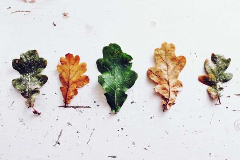oak3-leaves-1-780.jpg