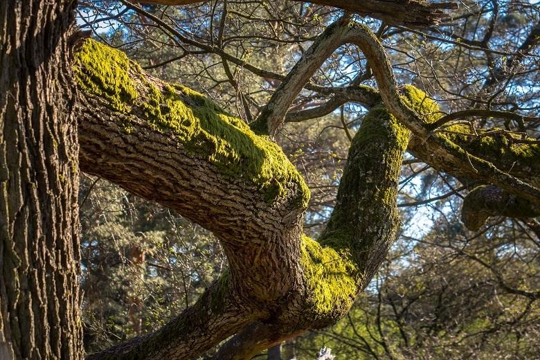 oak8-tree-780.jpg