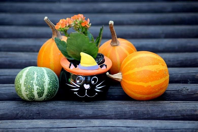 pumpkins-780.jpg