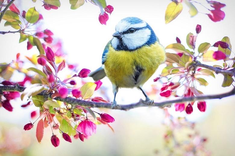 spring-bird-780.jpg