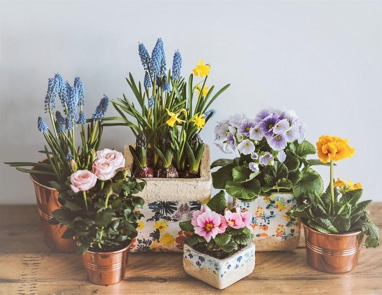 springflowers-780.jpg