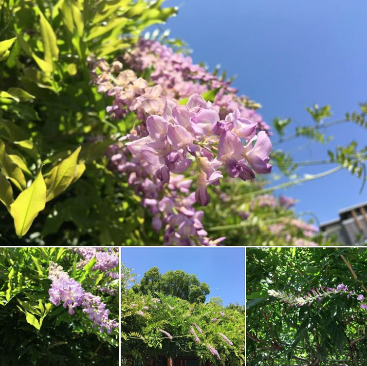 summer-fuji.png