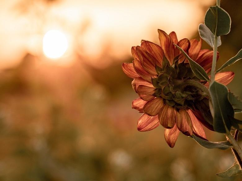 sunlight-flower-780.jpg