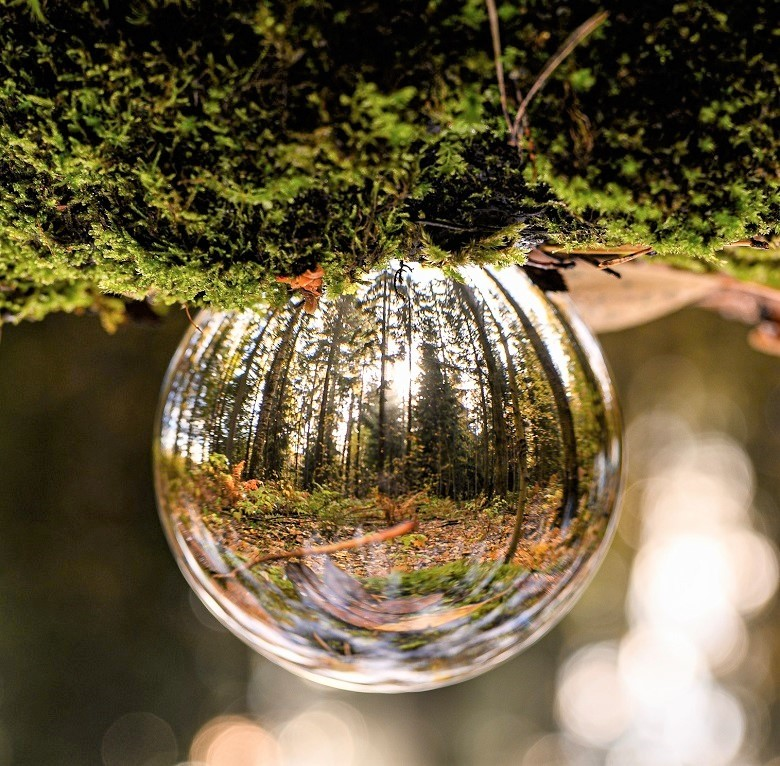 tree-ball-780.jpg