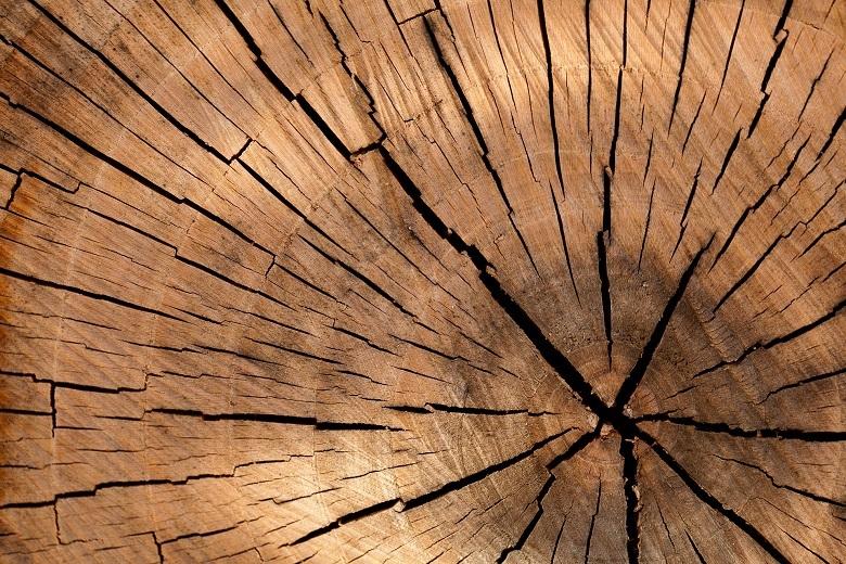tree-lumber-780.jpg