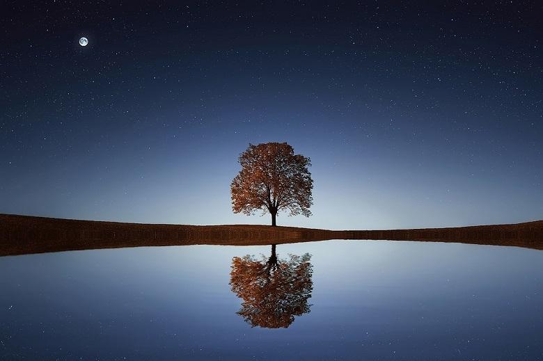 tree-moon-780-2.jpg
