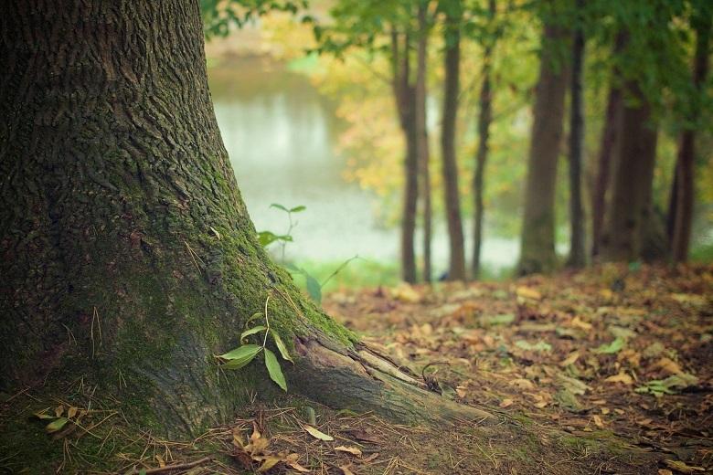 tree-trunk-780.jpg