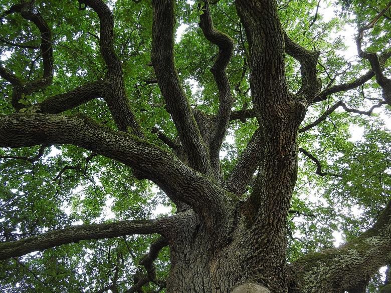 tree1-780.jpg