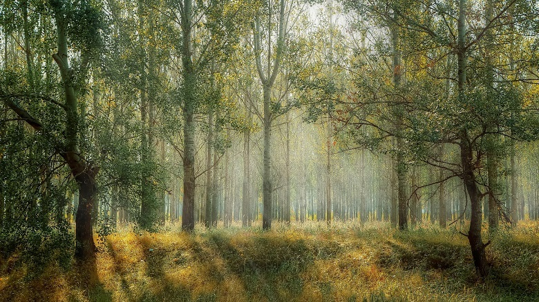 trees-780-1.jpg