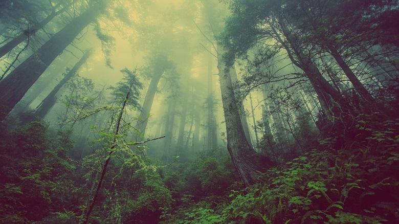 trees-780-2.jpg