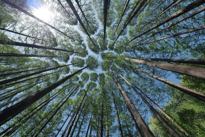 trees-780-3.jpg