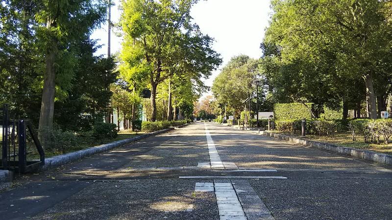 砂沼広域公園メイン通路2019