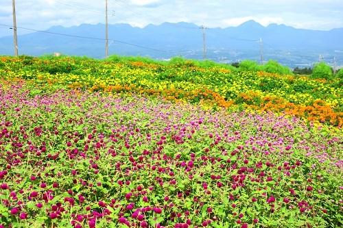 030色とりどりの花