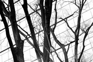 200202_metlife_tree_01w.jpg