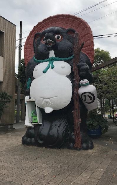 IMG4661 タヌキ