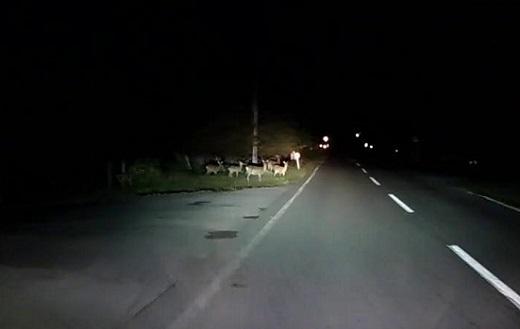 鹿たくさん_F