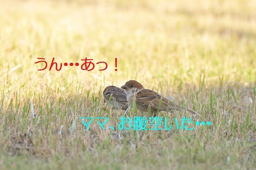 010_201908191251129ea.jpg