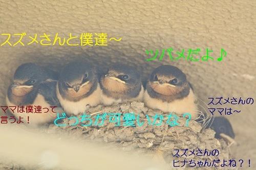 030_20190705221738dc9.jpg