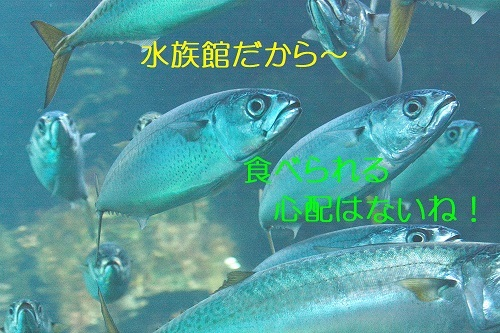 060_2019100321560253b.jpg