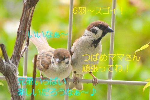 070_20190705221744b9a.jpg