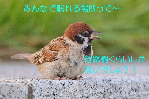 080_20190910231949bdc.jpg
