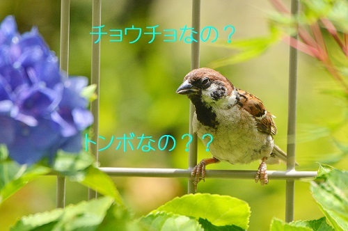 090_20190701223019556.jpg