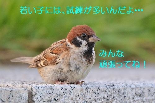 110_20190910232020225.jpg