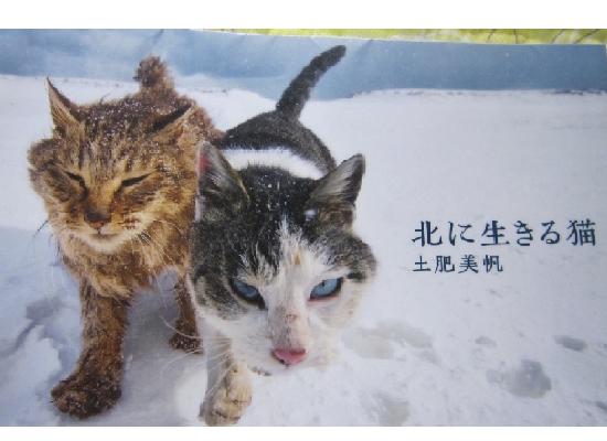北に生きる猫