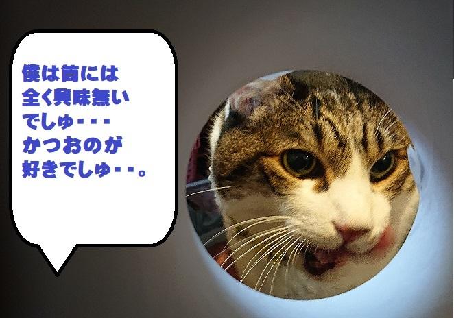 DSC_0148.jpg